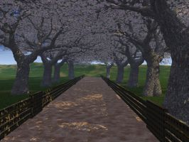 Cherry Walk - High Res by wiyaneth
