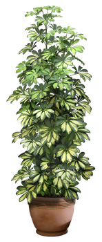 plant png 8 by DIGITALWIDERESOURCE