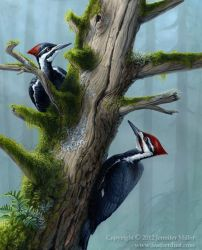 Forest's Benefaction - Pileated Woodpeckers by Nambroth