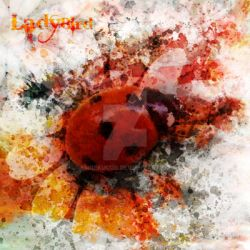 LadyBird by emrekucur