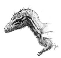 Another Raptorex sketch by dustdevil