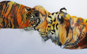 Tigers by Amelie-Gray