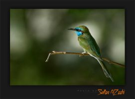 GREEN BIRD by Sultan-AlZaabi