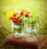 flowers and herbs. by sayra