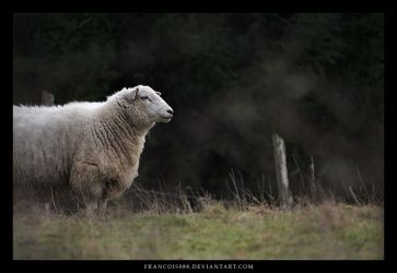 Sheep by Francois088