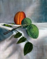 Still Life with Apricot by hank1