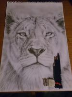 Lion Drawing in Graphite by JonARTon