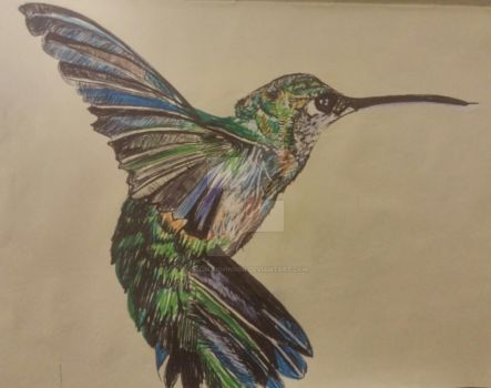 humming bird ballpoint pen sketch. by colinjjohnson