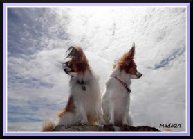 Papillon in the sky by Mado29