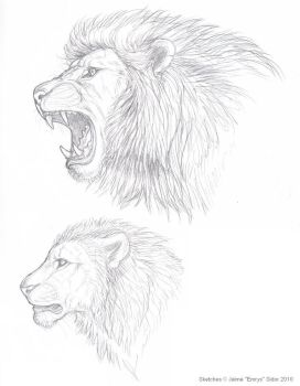 Lion sketches by Emryswolf