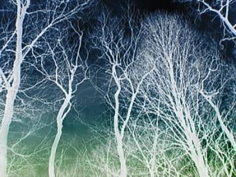 Inverted Trees by ezo