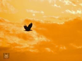 A Soaring Eagle by wolfwings1
