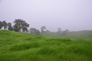 Rainy meadow of Reunion Island in the fog by A1Z2E3R