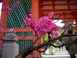 plumblossom in Kyoto by Tanbi-no-Kami