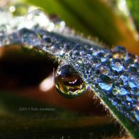 morning dew by FlorinALF