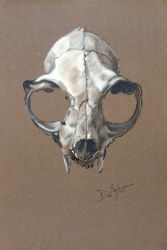 Catskull Study by Duncan-Eagleson