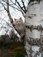 Cat on the tree by Irrisor-Immortalis