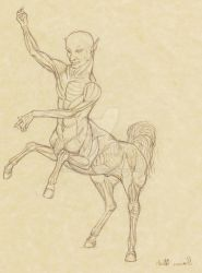 Centaur Musculature by Xenothere