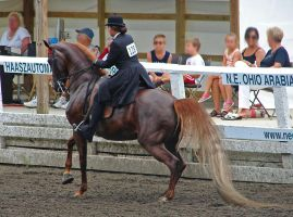 National Show Horse 5 by shi-stock