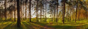 Sunshine in the forest by mannromann
