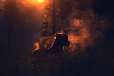 steaming dog by nbd12