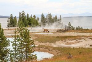 Elk of the hotsprings by Mana-C-E