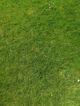 Short grass (lawn) by supersnappz16