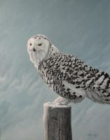 Ghost of Winter - Snowy Owl by CitizenOlek