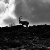 Into the wild by StrangerLyri