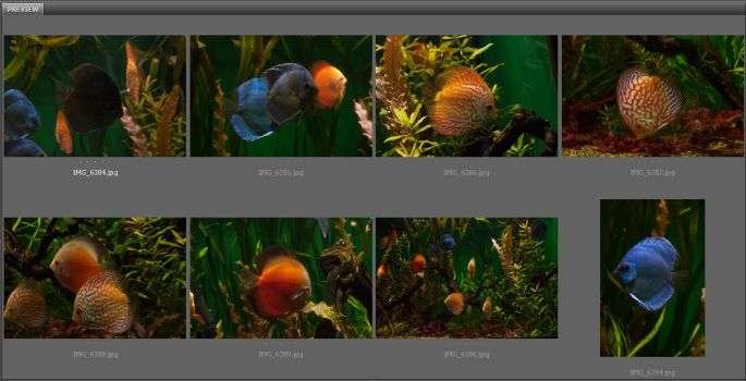 Discus Fish Pack by ManicHysteriaStock