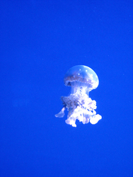 Jellyfish Stock 3 by Moonstone-Designs