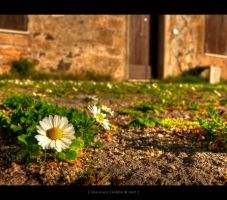 autumn flowering by gianf