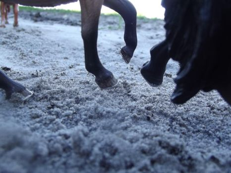 The Clash Of Hoof--Schleich by LazyHcustomtack
