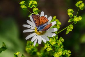 The Butterfly flower by bulgphoto