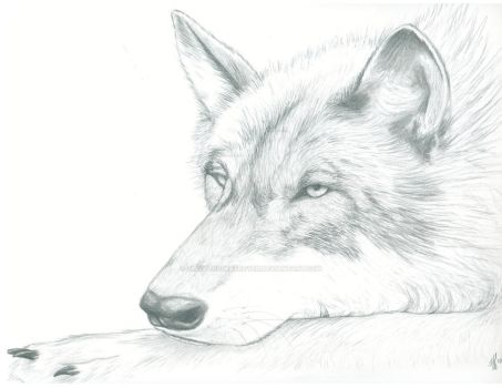 The Sleeping Wolf by ShivatheDestroyer