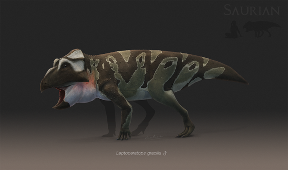Leptoceratops gracilis by ChrisMasna