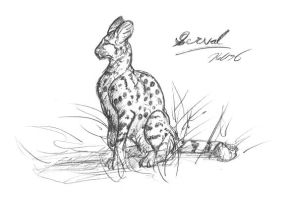 Serval by krazykelli