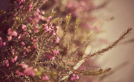 Spring is rapidly approaching by starlightbeauty07