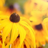 yellow. by Blueberryblack
