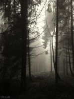 Forest Unknown by Weissglut