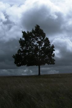 Lonely Tree by SweetyBaby86