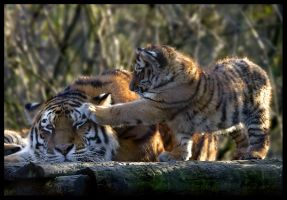 Mother and Cub 6 by Wolfy2k4