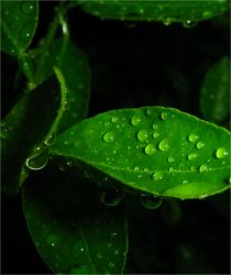 Gotas by thiagolooney