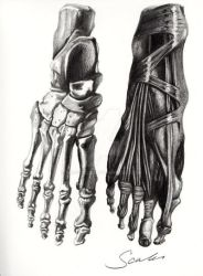 Foot - Pencil by mr-scales