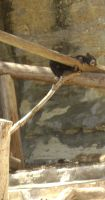 San antonio zoo picture 32 by Inya-spring