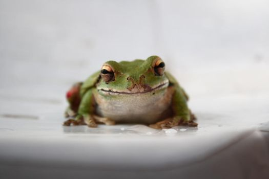 another frog pic by veronica-annemarie