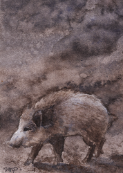 aceo boar by kailavmp