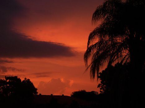 Red sky, black palms by setmymeowfree