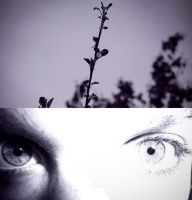 Fragility by LAPoetry-n-Photo