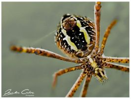 Spider Spinning a Web HDR by jaydoncabe